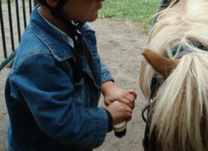 soins du cheval